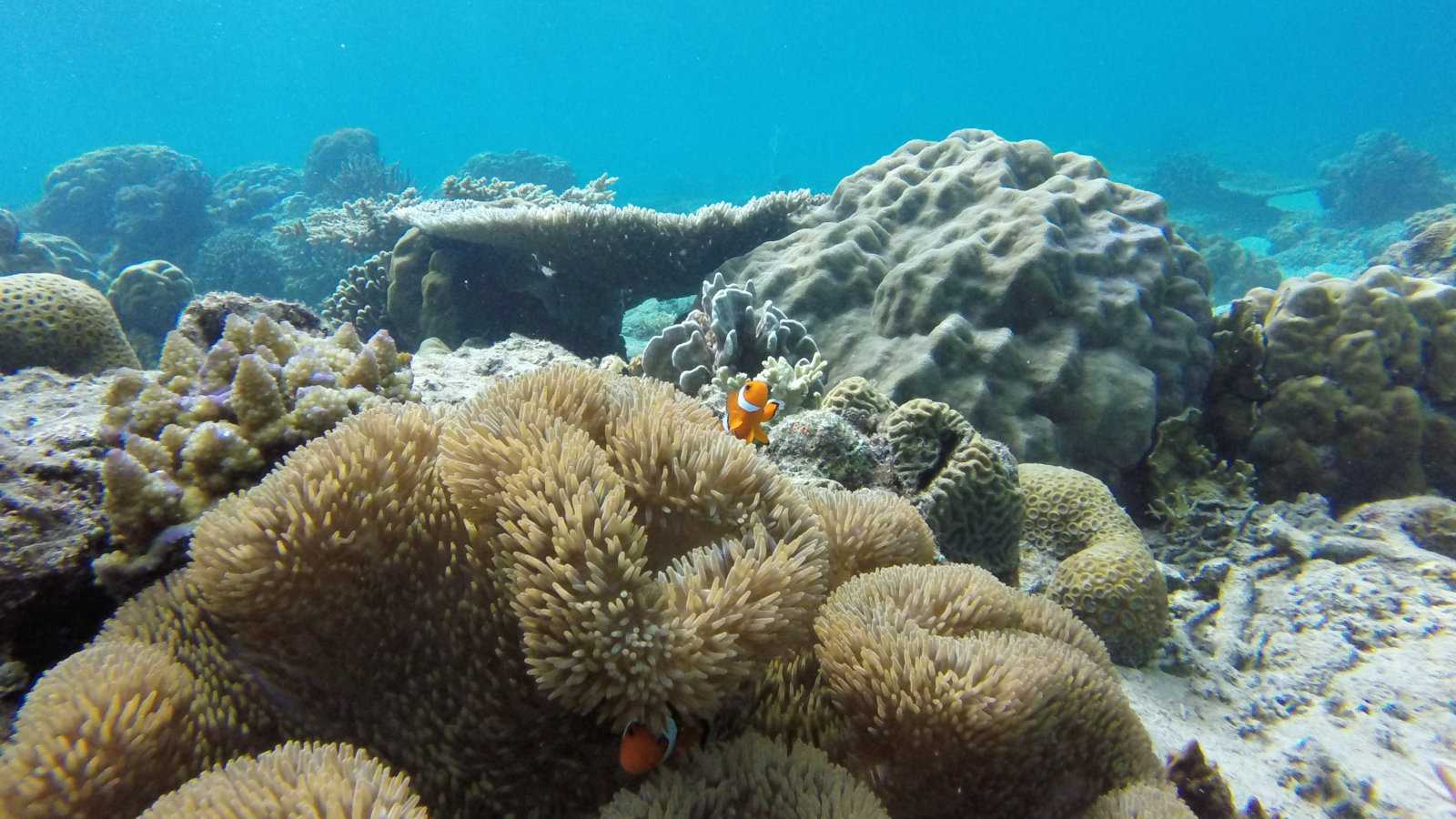 Tour C from El Nido is the best for snorkeling and seeing sea-life like clownfish!