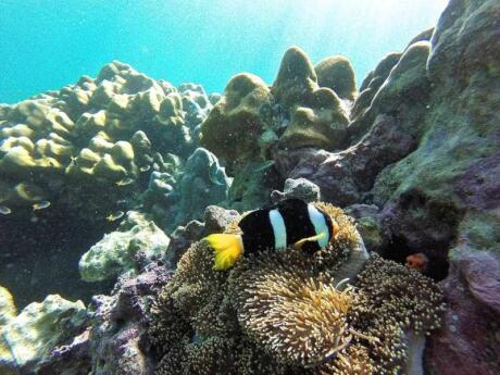 Koh Adang is a prime location for snorkeling and seeing lots of marine life
